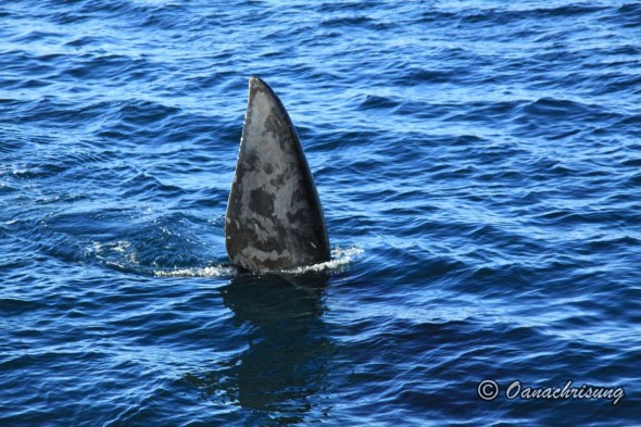 whale watching Puerto Madryn, Argentina (9)