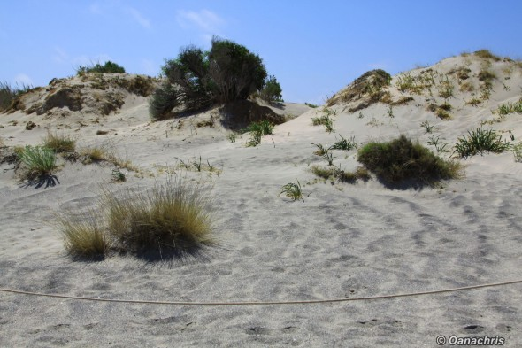 Elafonisi Beach - protected sand dunes