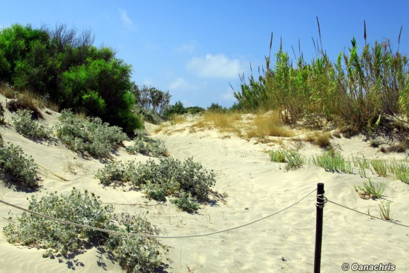 Elafonisi Lagoon - protected sand dunes
