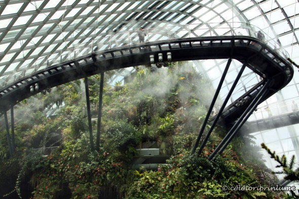 Cloud Forest Gardens by the Bay Singapore (1)