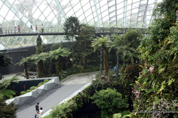 Cloud Forest Gardens by the Bay Singapore (2)