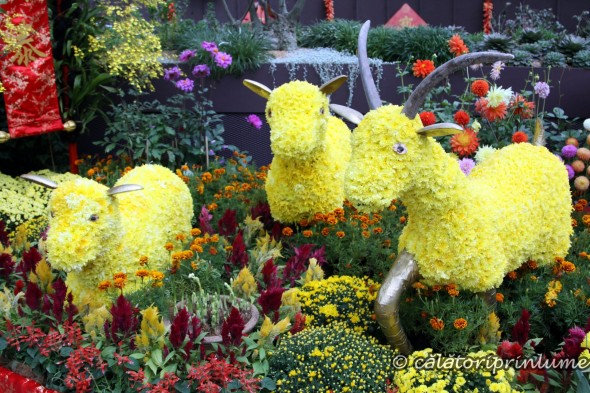 Flower Dome Gardens by the Bay Singapore - Chinese Nea Year Exhibition (1)