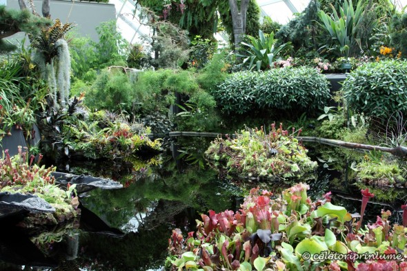 Pond inside Cloud Forest Gardens by the Bay Singapore. (2)