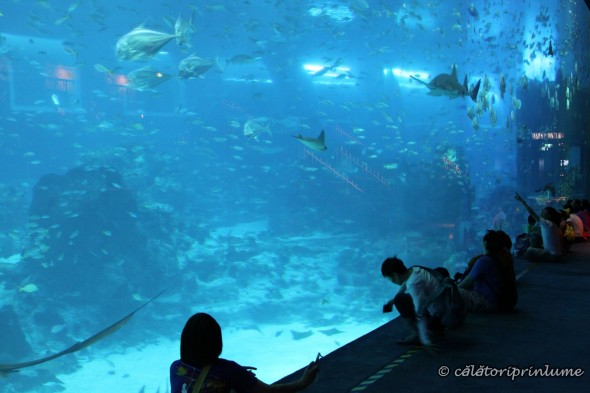 SEA Aquarium Singapore (10)