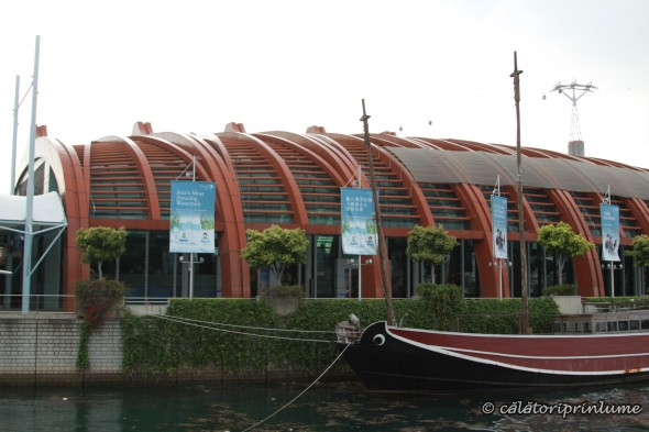 SEA Aquarium Singapore (16)