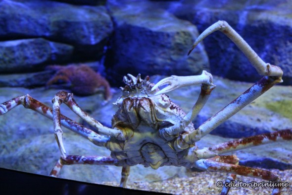 SEA Aquarium Singapore (4)
