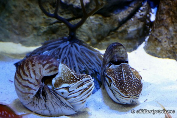 SEA Aquarium Singapore (6)